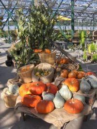 Harvest Fest at Sky Nursery