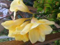 YellowFloral