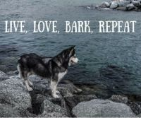 live love bark repeat