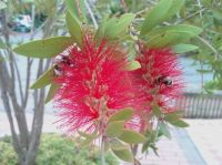 Flower with 'beesybodies'