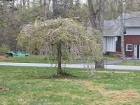 neighbors umbrella tree