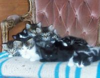 More kittens from Maxine