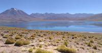 Laguna Miscanti - Andes - Chile