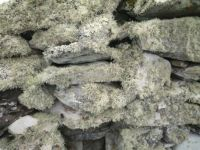 lichen-garvellachs-on rocks