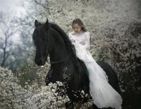 Young girl on a black stallion.