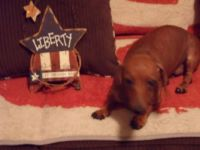 Liberty, Born on the 4th of July