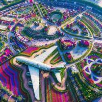 Dubai Miracle Garden, Dubai  6067