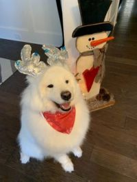 Merry Christmas, everypawdy!
