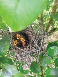 Hunger baby birds