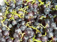 Grapes galore!