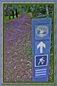 NSW  Walking Track Sign.