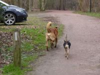 Series Dogs in the Park.  There Bambi and Norman trot to see if there are other dogs in the park