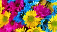 fresh flowers5