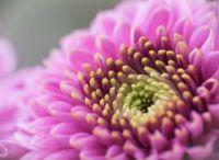 Flower Close Up 1