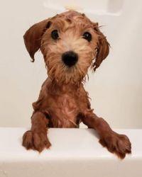 Bogey's first bath