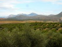 olive country, spain