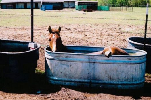 Horse keeping cool!