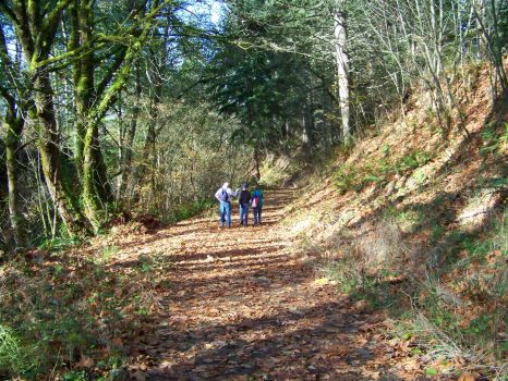 A walk in Sequalitchew Creek Canyon