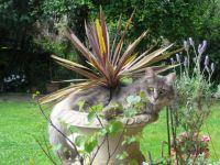 Puss in a pot