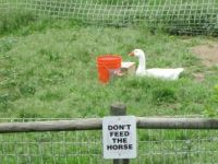 Theme: funny signs