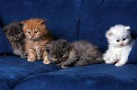 4 jonge kittens