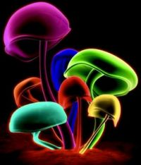 Pretty mushrooms