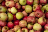 Apples  by Akshay Nanavati