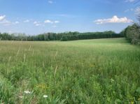 Local Meadow