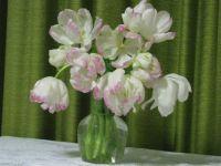 Birthday tulips