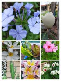 Colours from my garden