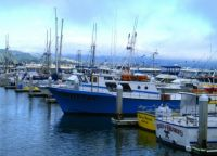 Pillar Point Harbor - Half Moon Bay California