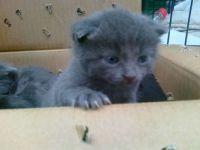 Rescued kitten 13. June 2011