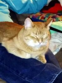 Wally feeling better!  Sitting on Daddy's lap.
