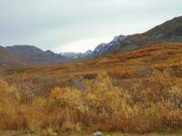 DSC01216        Hatchers Pass Alaska
