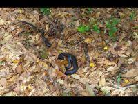 Black Snake in my son's  wife's mother's garden !