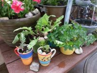plants in cups