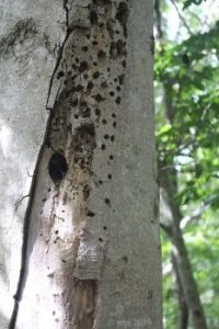 Holes In Tree