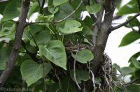 baby birds in the nest