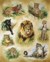 Beautiful big cats!