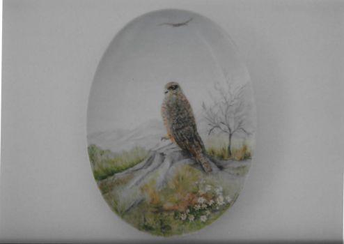 NZ Kahu-Harrier Hawk