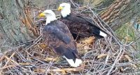 Mom and Dad Decorah Eagles