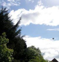 Vol au dessus des arbres de Prune