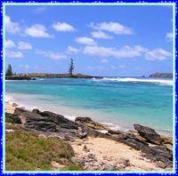 Lone Pine, Norfolk Island.