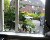 Neighbour kitty Google in front or our kitchen window...