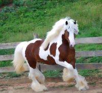 Awesome Stallion!