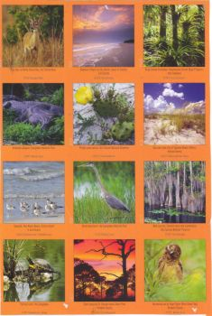 Florida Nature Calendar - my old one from 2012 (a few close ups to follow)