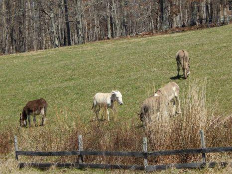 Donkeys in the brush