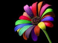 041 - Simple Flower