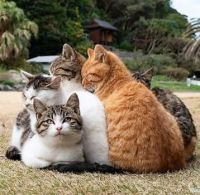 A cluster of cats
