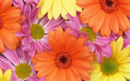 fresh flowers.jpg4